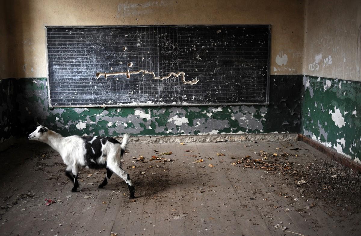 Gambar 6. Foto Seekor Kambing Berjalan Bebas ke Ruang Kelas Sekolah yang Terbengkalai Tak Berpenghuni dan Telah di Tutup di Desa Voynitsa yang Merupakan Desa Termiskin di Bulgaria.