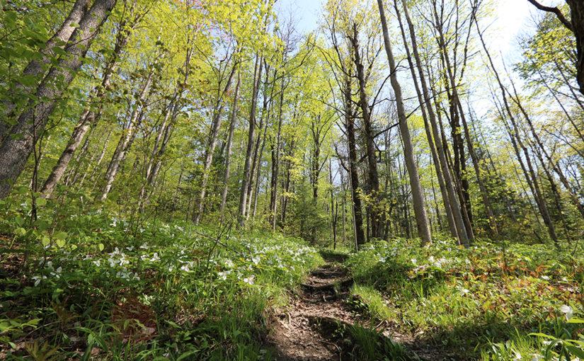 Gambar 1 Ilustrasi Hutan Sebagai Tempat Melakukan Waldeinsamkeit