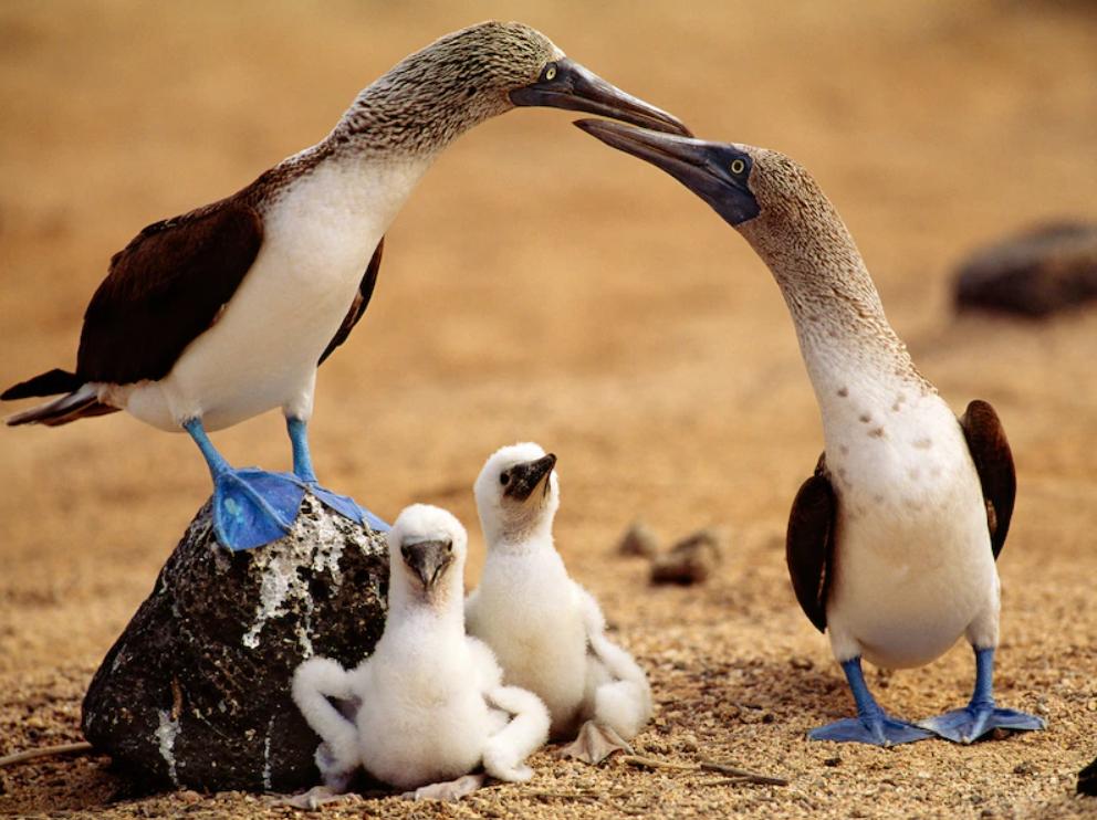 Gambar 2. Burung berkaki biru