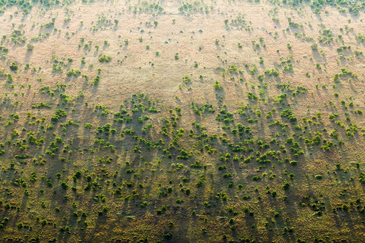 Gambar 1 Upaya Awal Program The Great Green Wall