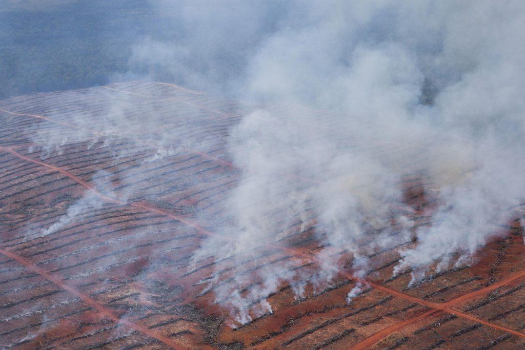 Gambar 1 Deforestasi di Papua Tahun 2013 – PT Berkat Citra Abadi Konsesi.