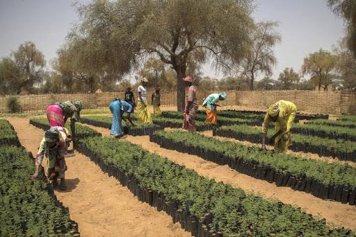 Gambar 2 Pemberdayaan Masyarakat dalam Program The Great Green Wall