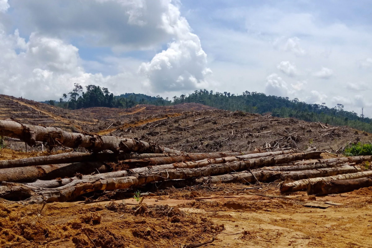 Gambar 2 Penebangan Hutan