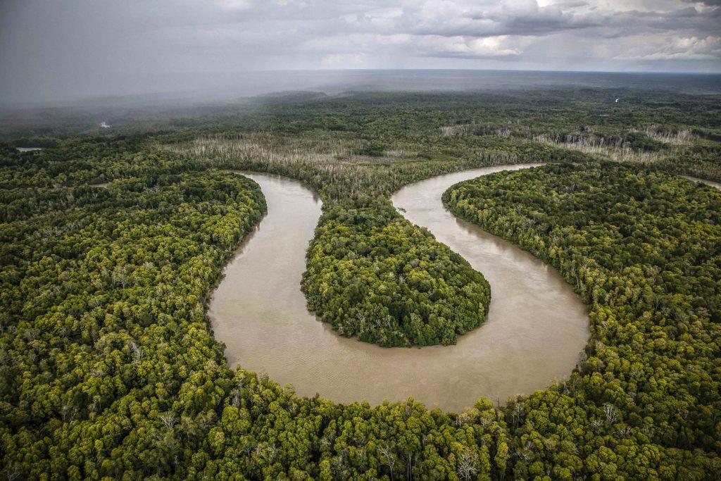 Gambar 2 Hutan di Papua Selatan.