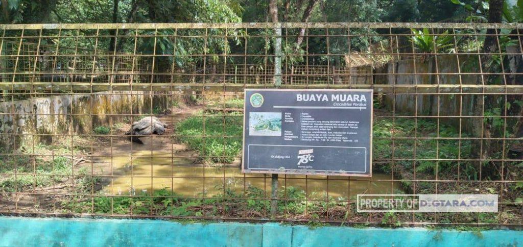 Gambar 3 (Era New Normal, Pengunjung Medan Zoo Masih Minim)