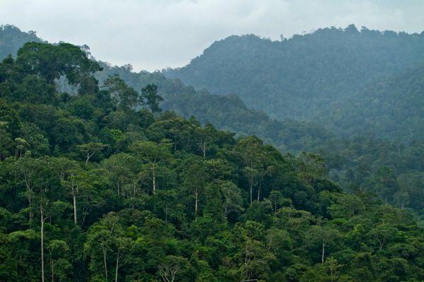 Gambar 1. Kawasan Hutan Pegunungan Meratus