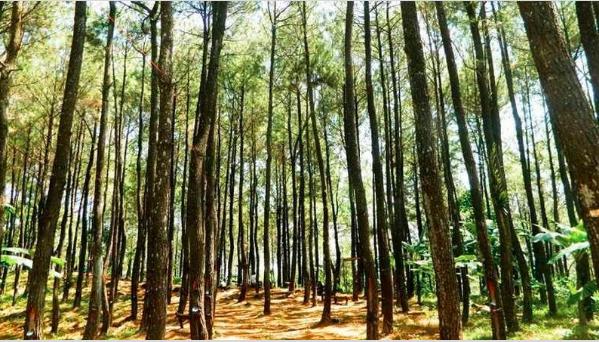 Gambar 1. Hutan