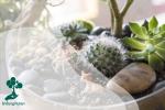 Terarium, Bentuk Visualisasi Tanaman dalam Botol Kaca