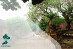 Pelestarian Lingkungan Berbasis Kearifan Lokal ala Masyarakat Desa Tenganan Pagringsingan