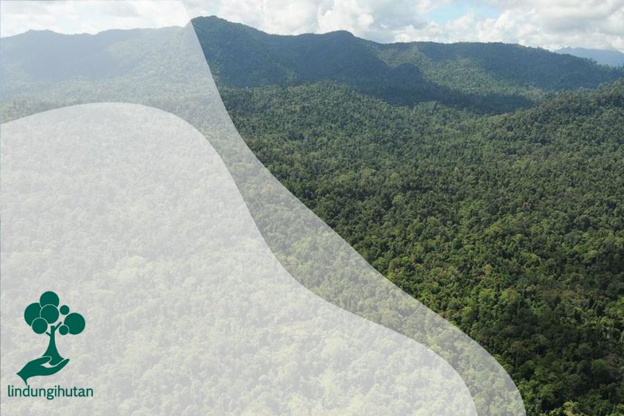 Mengenal Kawasan Hutan