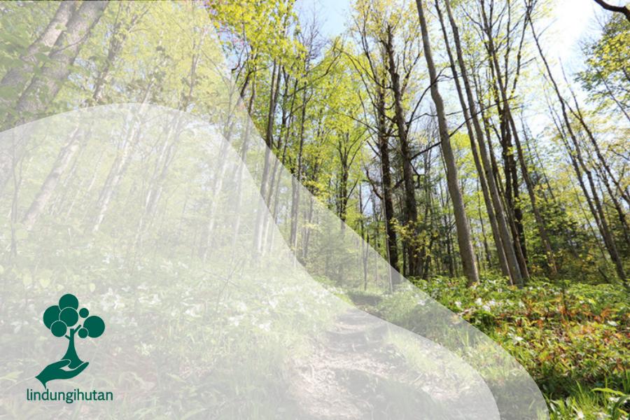 Waldeinsamkeit, Tradisi Orang Jerman Menyendiri di Hutan