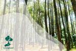 Pentingnya Sertifikasi Hutan Lestari