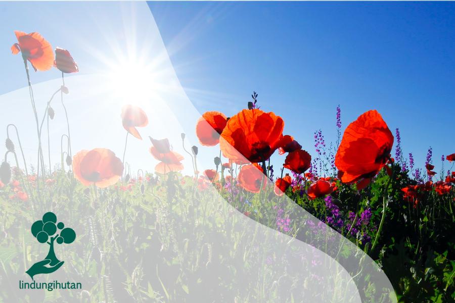 Apakah Krisis Iklim Mempengaruhi Warna Bunga?