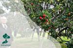 Pohon Salad: Pohon Dengan Banyak Jenis Buahnya