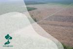 Melihat Pelestarian Lingkungan ala Masyarakat Bali Kuno