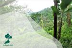 Darién Gap, Hutan yang Mematikan