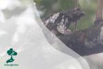 Sunda Frogmouth: Burung dengan Paruh Yang Unik