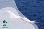 Mengenal Boto, Lumba-Lumba Pink dari Sungai Amazon