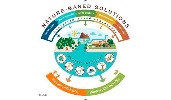 Gambar 2. Nature Based Solutions