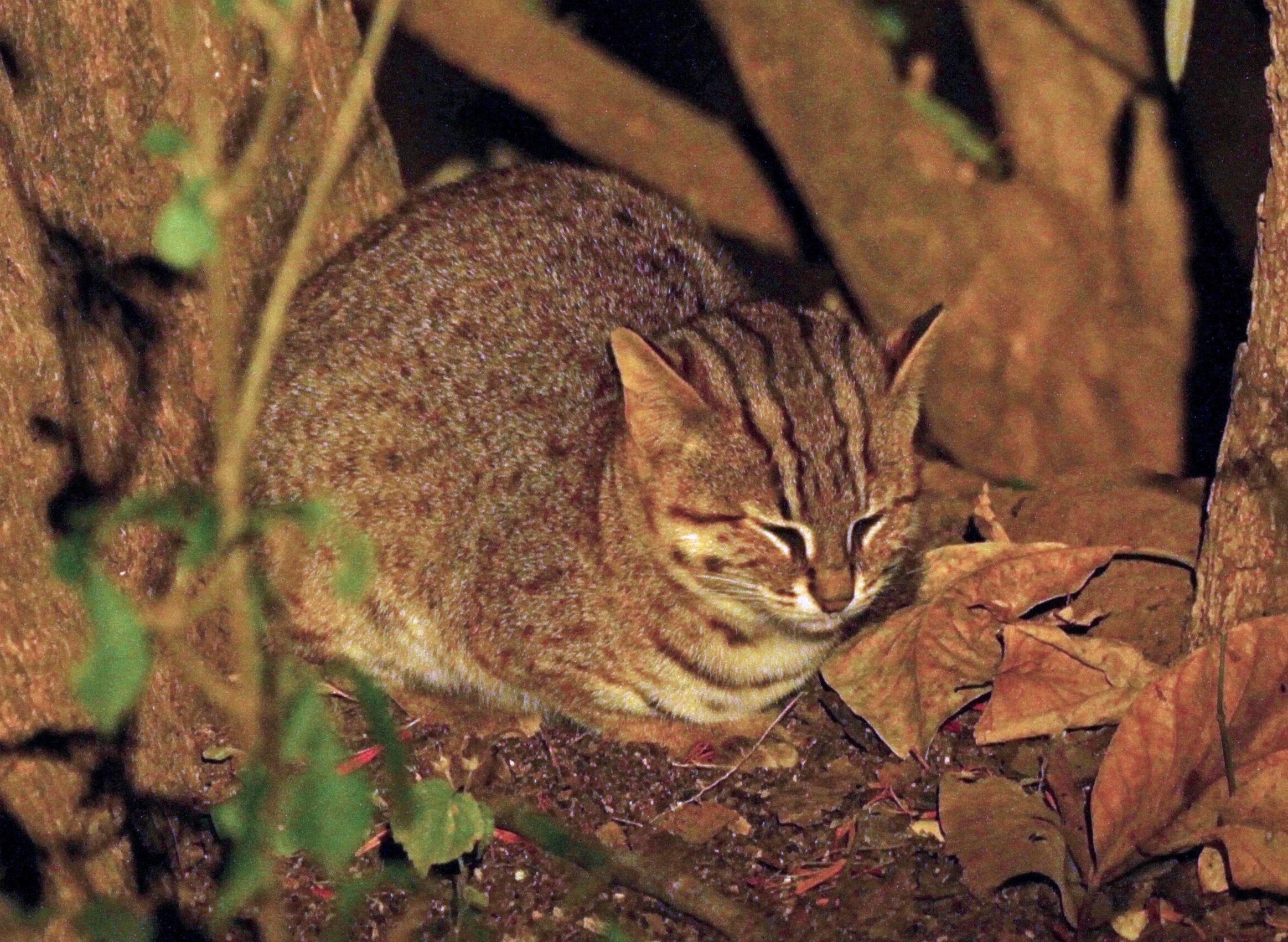 Gambar 2 Kucing Totol