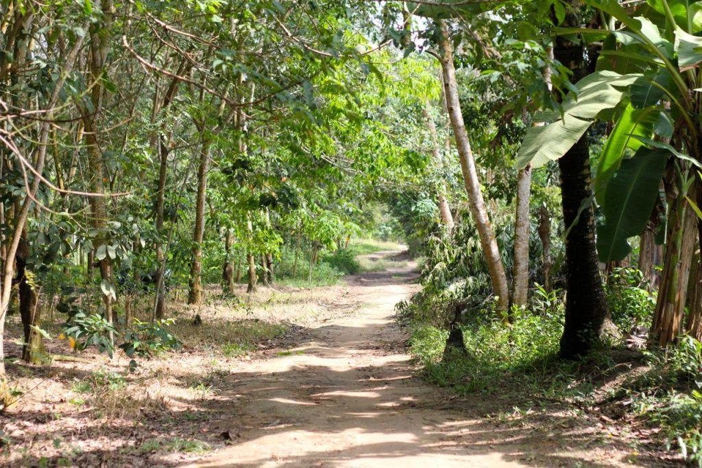 Gambar 1. Hutan Rakyat