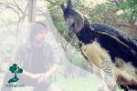 Elang Harpy, predator terkuat di dunia