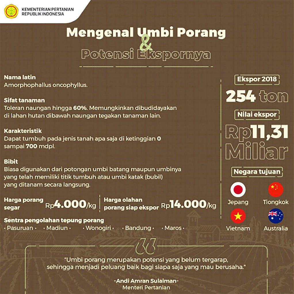 Gambar 2 Infografik Tanaman Porang