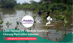 1.000 Trembesi PT. Mondelēz Indonesia Cikarang Plant untuk Indonesia