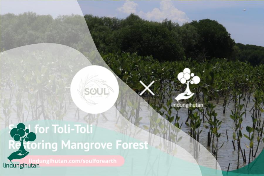 """Soul for Toli-Toli """"Restoring Mangrove Forest"""""""