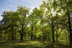 Hutan Kota, Perannya dalam Sekuestrasi Karbon di Perkotaan