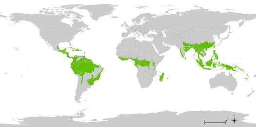 persebaran hutan hujan tropis