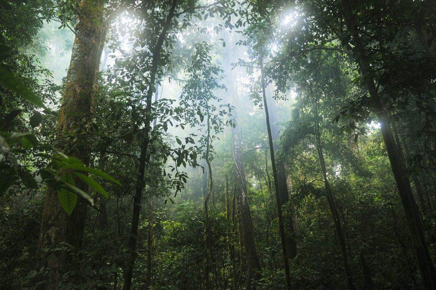 Hutan Hujan Tropis: Ciri-ciri, Persebaran, Manfaat, Cara Menjaga